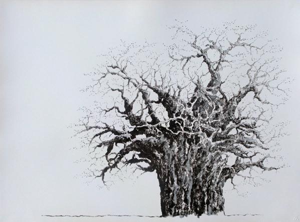 Charcoal baobab