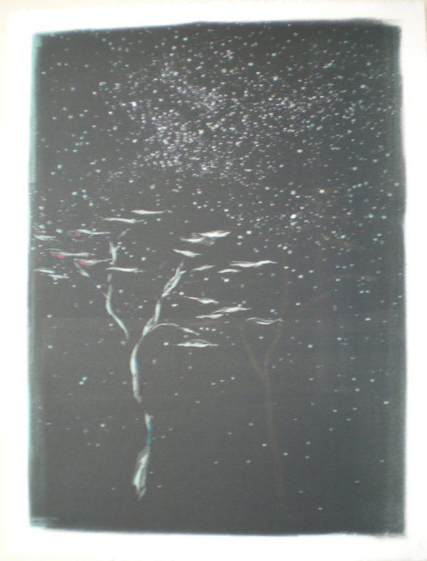Starry Acacia