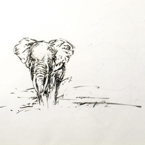 Elephant b