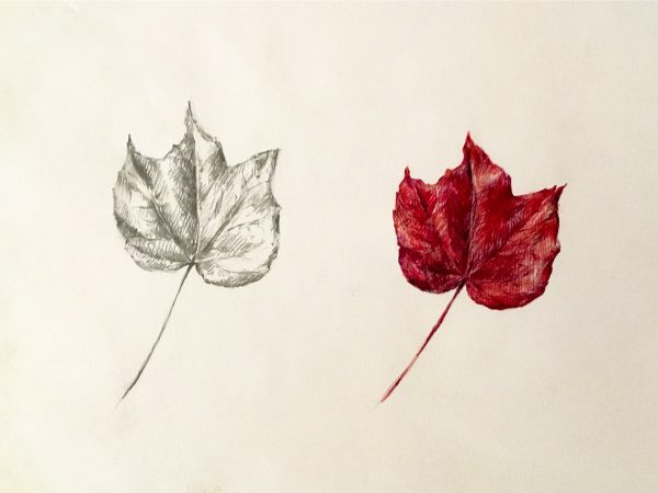 Leaves Study