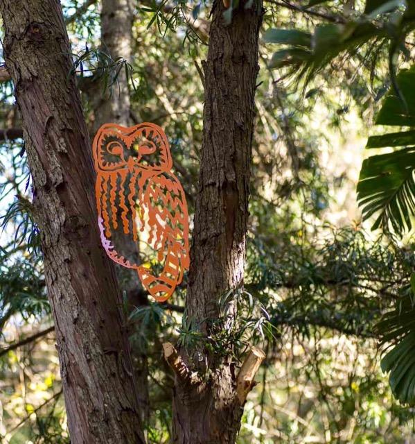 Owl Y