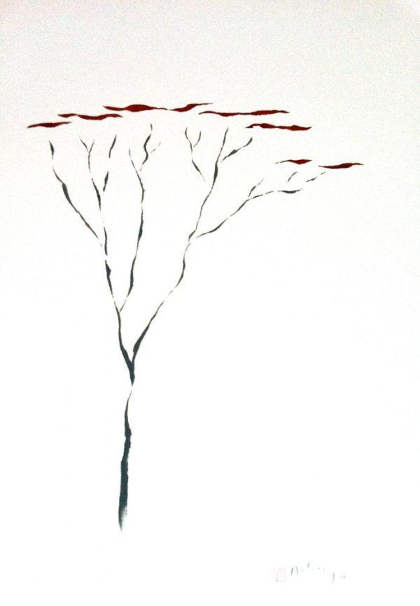 Umbrella Thorn 1