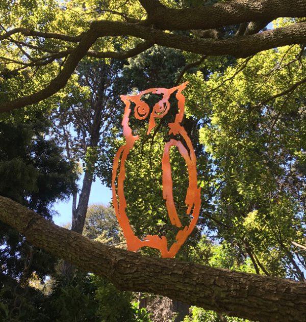 Owl BB