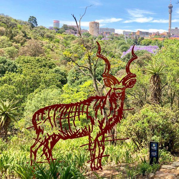 City kudu (male)