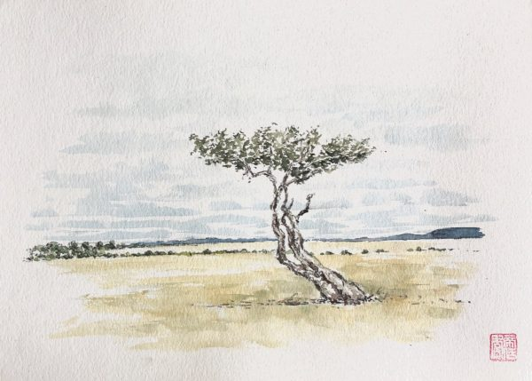 Maasai Mara tree sketch