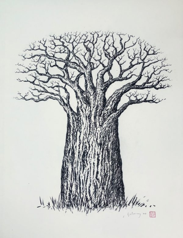 The doctor's baobab