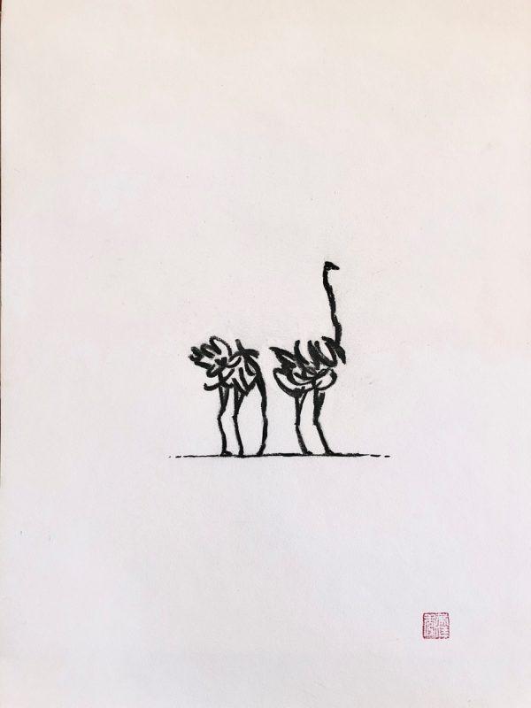 Ostrich sketches